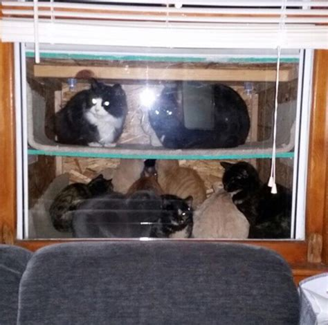 outdoor shelter for cats this built a cataquarium for freezing cats on