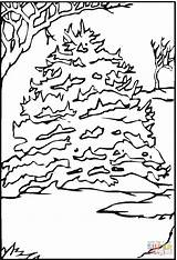 Pine Coloring Tree Trees Snow Printable Supercoloring Coloringpages101 sketch template