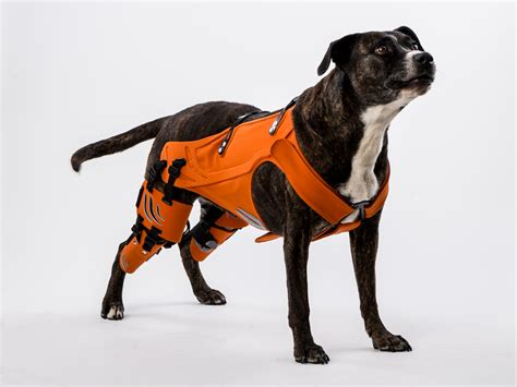 smart harness  dogs  hip dysplasia wired