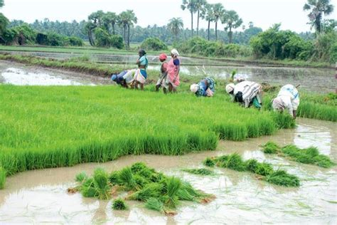 Who Benefits From Farm Loan Waivers?