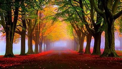 4k 8k Autumn Trees 5k Leaves Park