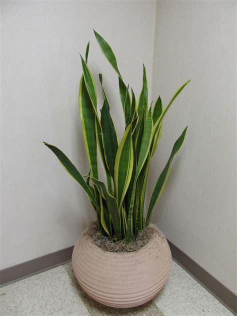 indoor plant re potting indoor plants what grows there hugh conlon horticulturalist professor