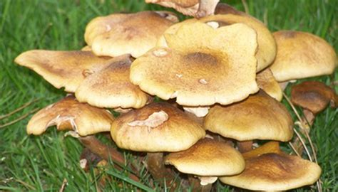 Common Types Of Fungi Found In Soil Sciencing