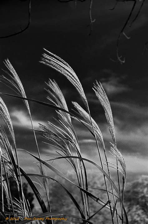 whispering wind photograph by dan crosby