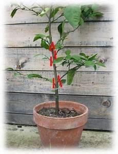 Quand Planter Un Pommier : les 30 meilleures images du tableau la taille des arbres ~ Dallasstarsshop.com Idées de Décoration