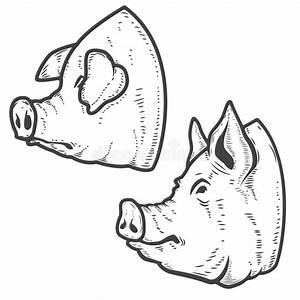 Set Of Pork Meat Labels  Butcher Shop  Pig Heads  Design