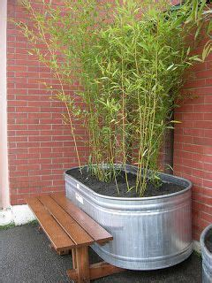 growing bamboo in containers 25 best ideas about bamboo planter on bamboo 4105