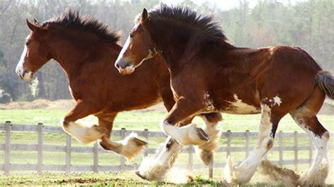 Wie Viel Kostet Ein Eigenes Pferd
