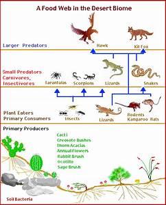The 25  Best Desert Biome Animals Ideas On Pinterest