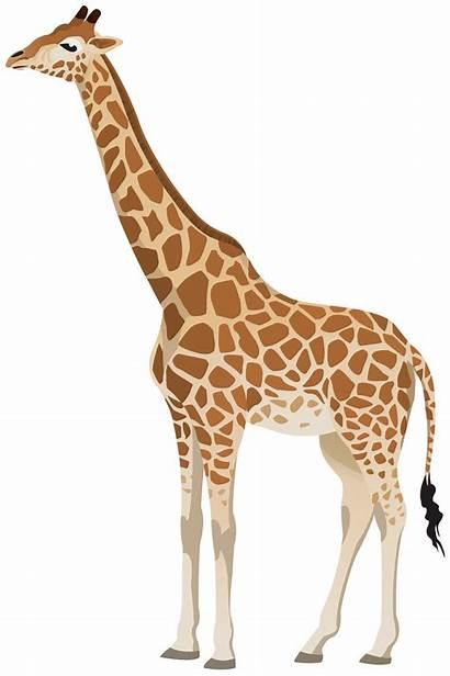 Giraffe Clipart Transparent Animals Cartoon Clip Yopriceville