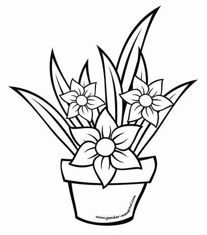 Bunga Gambar Pot Sketsa Dalam Mewarnai Mawar