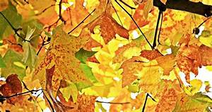 Kostenlose Bilder Herbst : goldener herbst bilder pixabay kostenlose bilder herunterladen ~ Yasmunasinghe.com Haus und Dekorationen