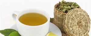 Verveine Plante Tisane : en boisson auvergne france ~ Mglfilm.com Idées de Décoration