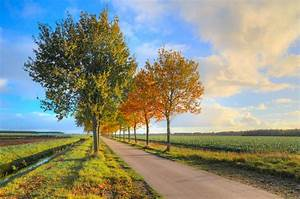 Free Images : landscape, tree, nature, forest, outdoor ...