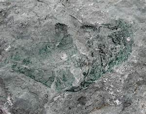 Louisville Fossils and Beyond: Silurian Green Fossil ...  Silurian
