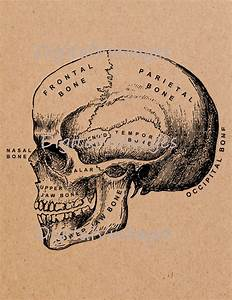 Human Skull Diagram Chart Download Printable Graphic