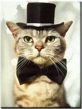 top   cats  bow ties pictures bro  simpson