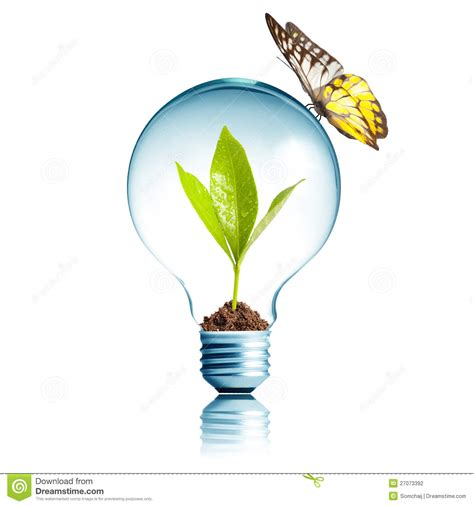 plant inside light bulb with butterfly stock photography