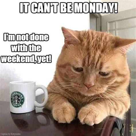 Coffee mixed with a little bit of humor creates a perfect combo. Pin by Alicia Blevins on Cats   Manic monday, Coffee captions, Monday