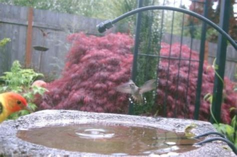 Backyard Bird Shop Locations by Attract More Birds Add A Dripper To Your Birdbath