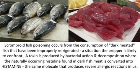 top  reasons scombroid fish poisoning kills preppers