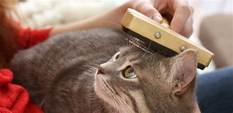 how to stop cats from shedding how to stop a cat from shedding smart cat