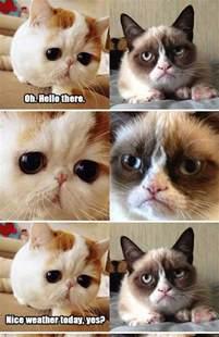 grumpy cat snoopy cat meets grumpy cat knowler this cat