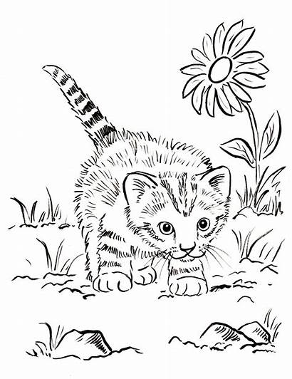Coloring Cat Pages Detailed Printable Realistic Kitten