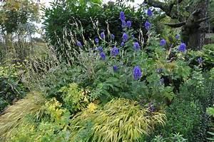 Pflanzen Im Schatten : welche pflanzen im schatten schattengarten welche pflanzen wachsen im schatten welche blumen ~ Orissabook.com Haus und Dekorationen