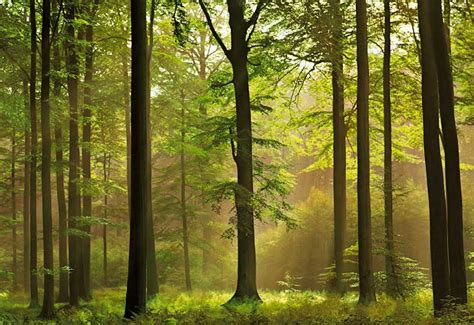 abstract wallpaper beautiful forest wallpapers