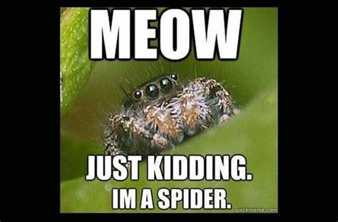 Spider Bro Meme - misunderstood spider meme bahahahaha pinterest spider spider meme and meme