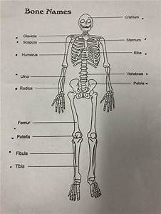 Pe    Bones Study Guide