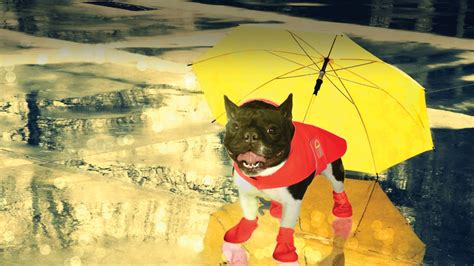 products  survive  rain   dog