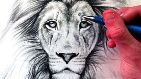amazing lion drawing  getdrawingscom