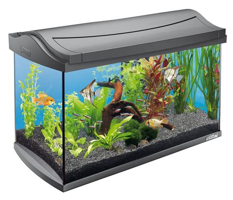 2 gallon glass nano aquarium komplettset unsere favoriten