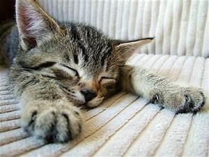 Balkonschutz Für Katzen : ver nderungen sind f r katzen stress stressvermeidung ~ Eleganceandgraceweddings.com Haus und Dekorationen