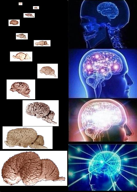 Brain Memes - logical conclusion expanding brain know your meme