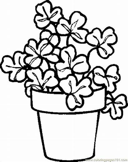 Coloring Plant Shamrock Pages Printable Drawing Flowers