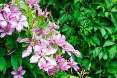 Welche Pflanzen Eignen Sich Als Sichtschutz : sichtschutz aus k beln so bauen sie eine wand aus pflanzen ~ Eleganceandgraceweddings.com Haus und Dekorationen