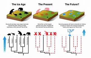 Mammals Cannot Evolve Fast Enough To Escape Current