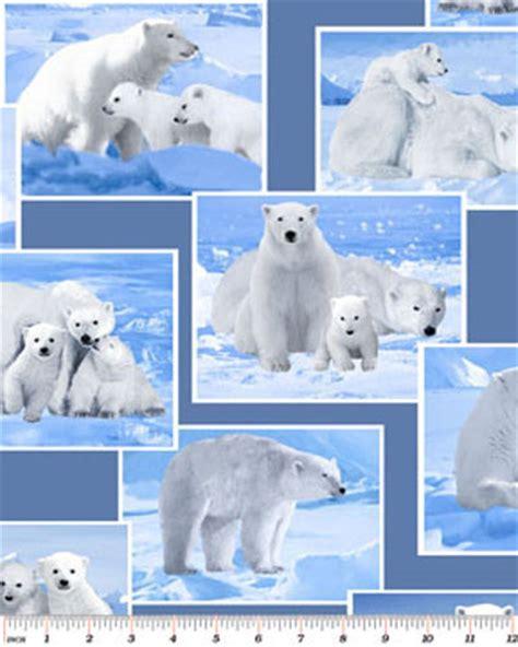 polar bears white  blue winter snow wild arctic cotton