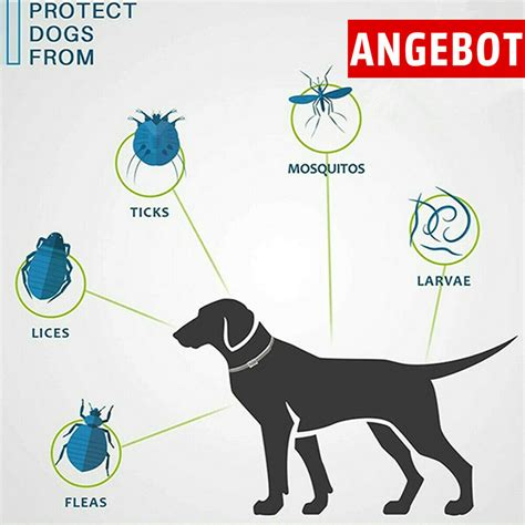 anti zecken halsband hund test vergleich anti zecken