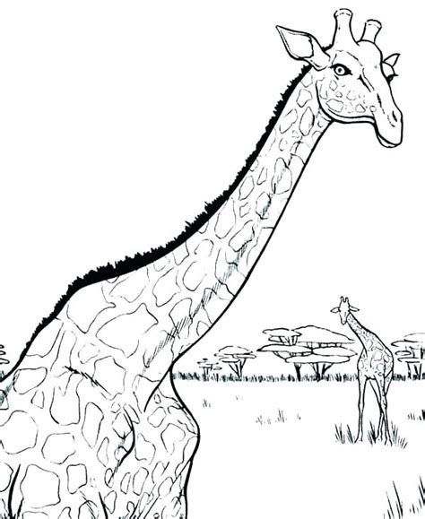 realistic giraffe coloring pages  getcoloringscom
