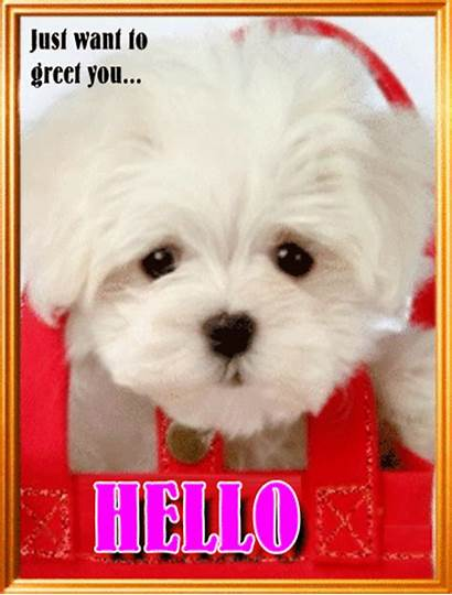 Hello Doggy Hi Says Greetings Cards Greeting