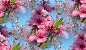 Fond D Ecran Fleurs Gratuit De Tout Et De Rien Page 6 Les