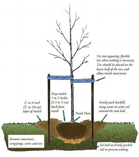 how to plant trees when to plant trees garden snips