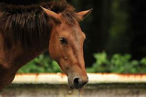 More Miyazaki Wild Horses | Tokyobling's Blog  Wild