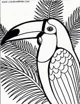 Coloring Toucan Dessin Oiseau Enregistree Depuis Coloriage sketch template
