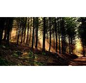 Nature Trees Forest Wood Leaves Branch Sun Rays