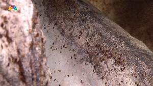 is this the worst bed bug infestation ever nbc 7 san diego With bed bugs san diego